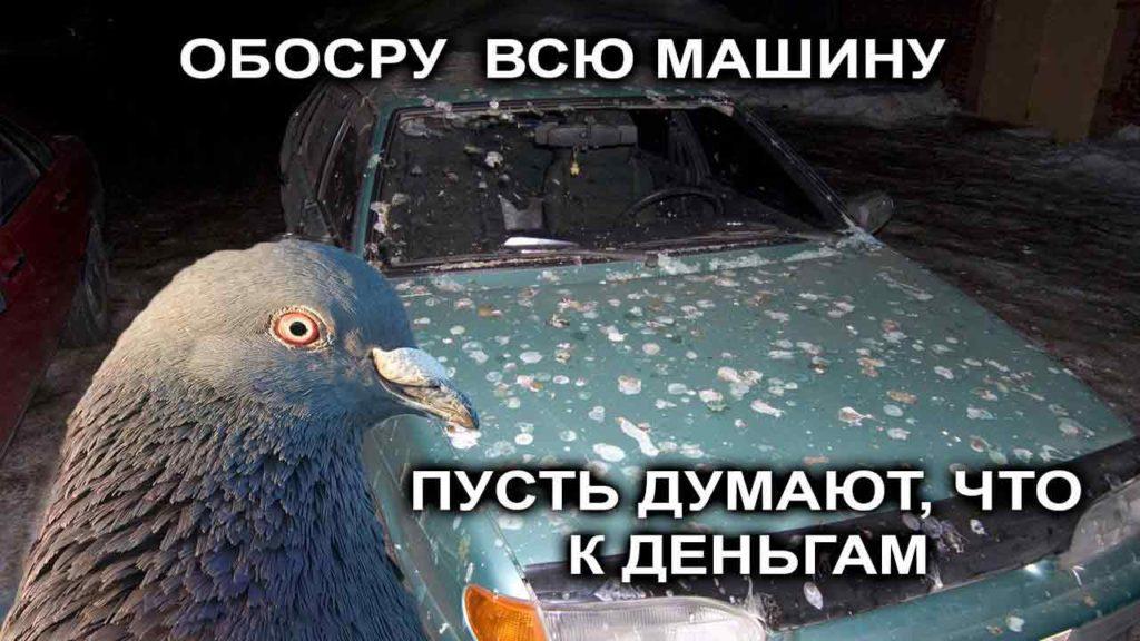 Чем опасен птичий помет для автомобиля? особенно летом