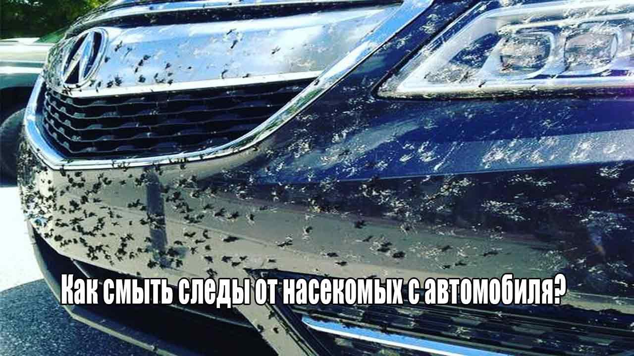 Как смыть следы от насекомых с автомобиля?