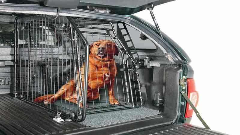 Как перевозить животных в машине?